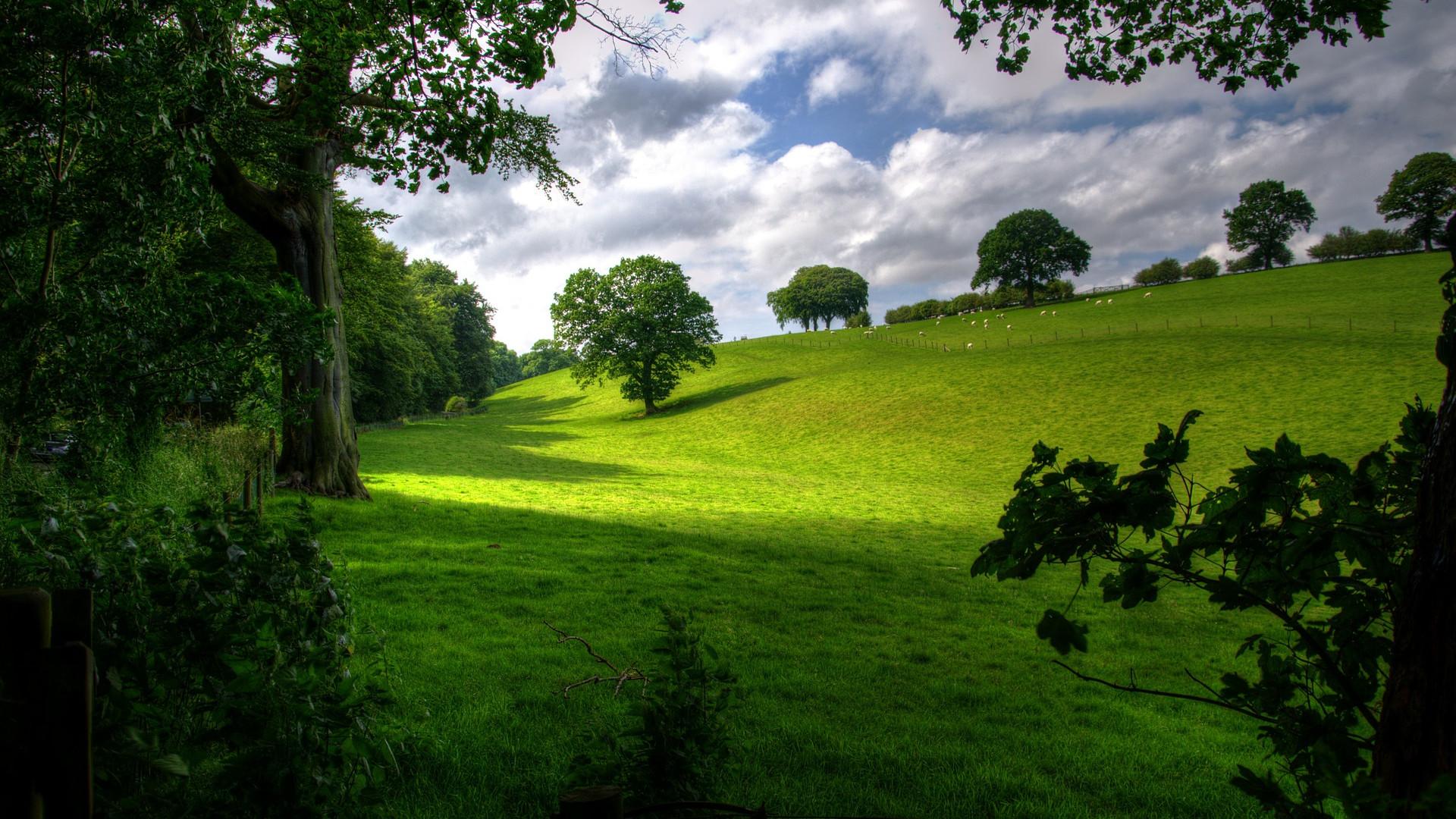 <h2>Ferien im Wenzelhof</h2><p>Ferien in ihre ursprünglichsten Form - Weite Wiesen und Wälder. Geniesen Sie die Natur bei einem Spaziergang durch die ursprüngliche Natur</p><a title='Mehr lesen' href='http://www.wenzelhof.de/verpflegung-unserer-feriengaeste/'>Mehr erfahren</a>