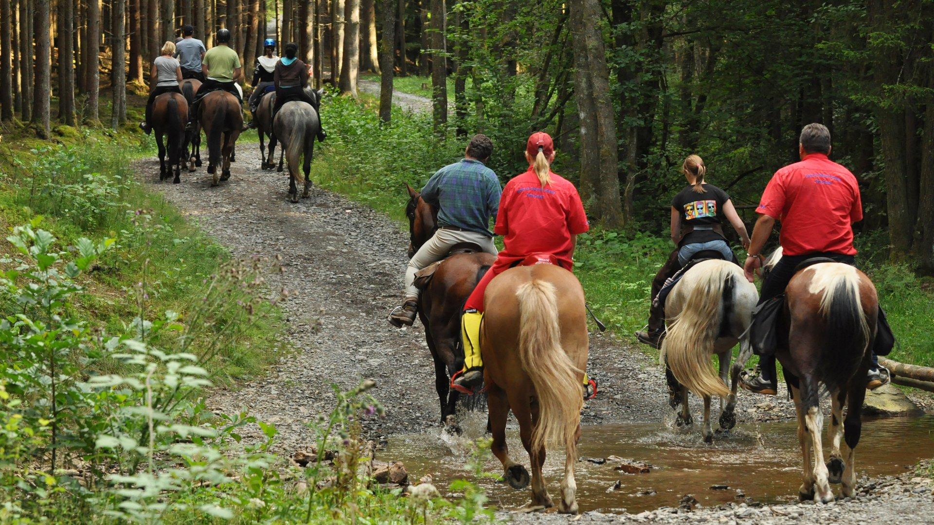 <h2>Ferien im Wenzelhof: Reiten in  der Natur</h2><p>Egal ob Sie Anfänger der Fortgeschrittener sind - unsere Touren stimmen wird genau auf Ihre Reiter-Fähigkeiten ab.</p><a title='Weiter lesen' href='http://www.wenzelhof.de/reiten-in-den-waeldern/'>Mehr erfahren</a>